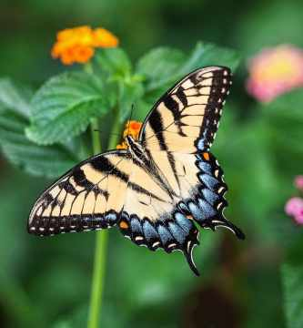Crean en Sierra de Gata una microrreserva de mariposas