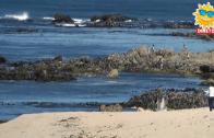 Praia Lagoa PV