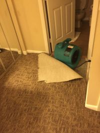 How to Dry a Wet Carpet   Paul Davis Restoration ...