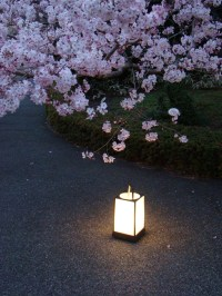 Lighting Up the Japanese Garden At Night  Moments of Ma