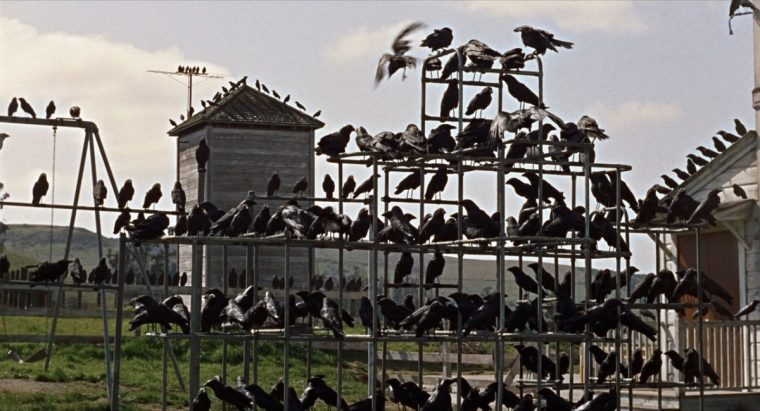 These frantic humans are a feast for the crows (The Birds, Universal Pictures)
