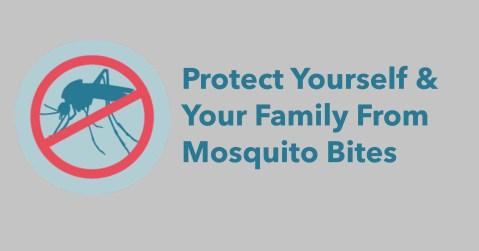 mosquito 2021.jpg