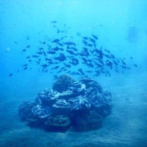 artificial reef project bali