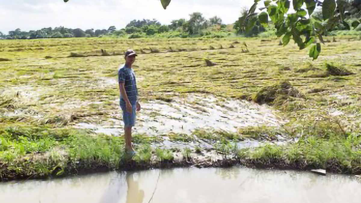 Agri damage in Bulacan due to 'Pepito' reaches P37-M