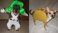 Funny-Dog-Halloween-Costumes - North DelaWHERE Happening