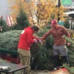 Cutting fresh trees on the Little Man Plaza.
