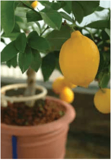 The Essentials of Successful Gardening