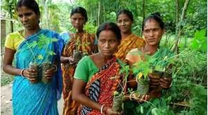 """Village """"Piplantri"""" Where 111 Trees are Planted on the Birth of Girl Child"""