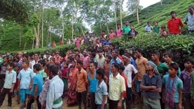 Assam- Tea garden owner fires on tea workers, 8 injured