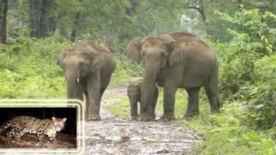 Assam Govtnotifies Dihing Patkai as a National Park- Minister for E&F