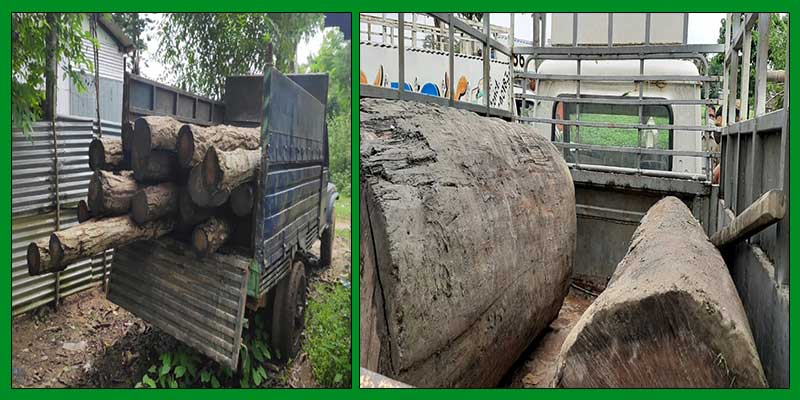Assam:Sal logs seized by forest personnel in Goalpara, Barpeta districts