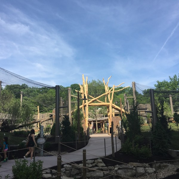 Cleveland Metroparks Zoo Tiger Passage Opens With Education Options