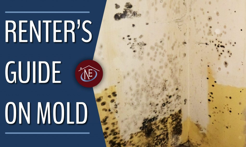 renters guide on mold