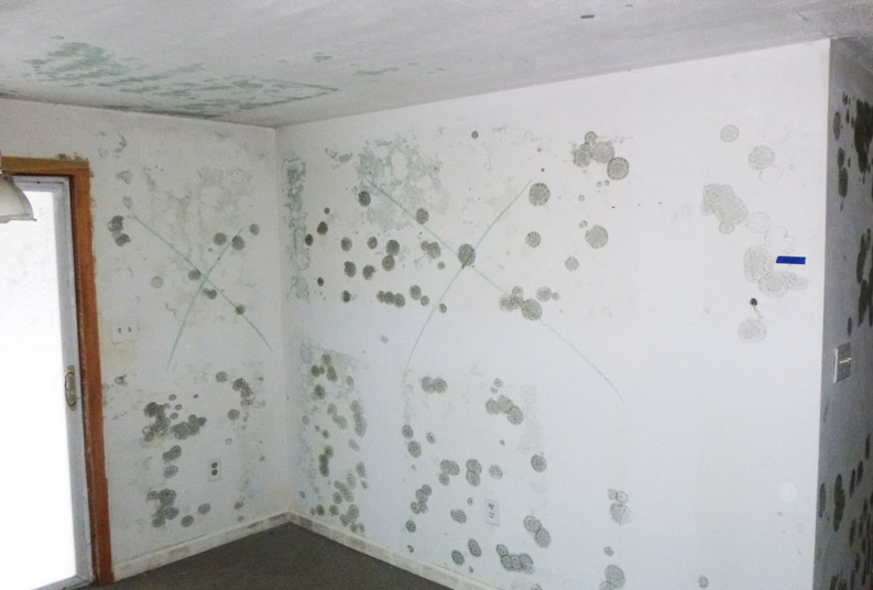 renter's guide on mold