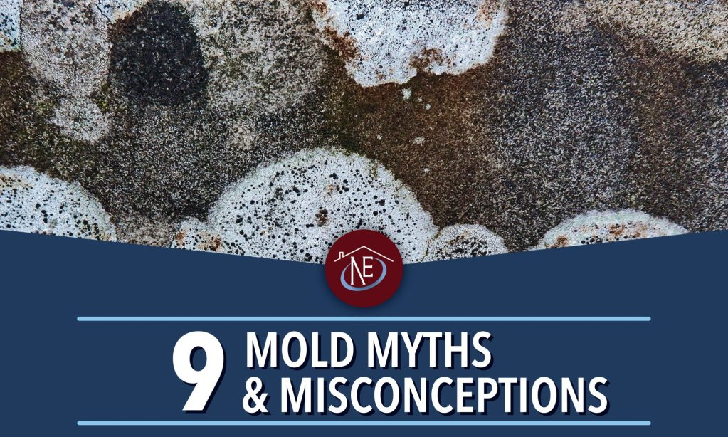 9 mold myths & misconceptions