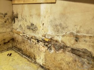 Mold-Wall