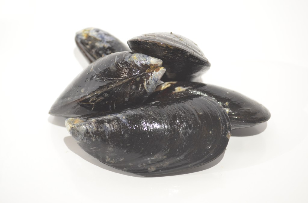 Mussels - Wild Chatam, MA