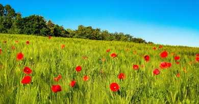 Raus in die Natur: Fünf Gründe, warum eine Fahrradtour in und um Northeim lohnt