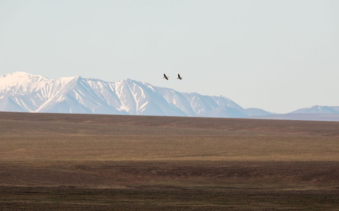 Take Action: Comment Period Opens for BLM's Call for Nominations for the Arctic Refuge Coastal Plain