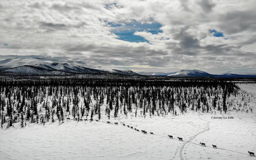Arctic Refuge Action: What's Next?