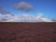 heather and rainbow, feldom ranges, yorkshire