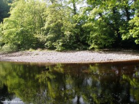 River Swale, Billy bank Wood, Richmond, North Yorkshire
