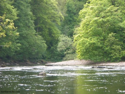 Billy Bank Wood and River Swale, Richmond, Yorkshire