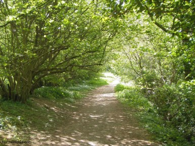 Round Howe Wood, Richmond, Yorkshire