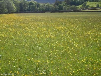 meadow, Arkengarthdale