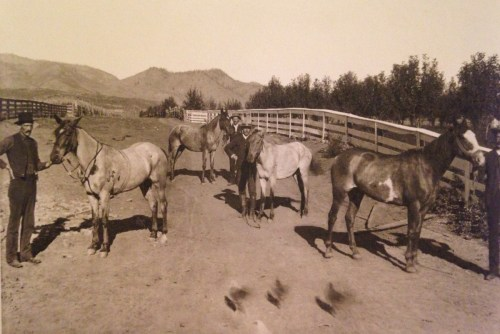 "This photo is of ""The Flowers Boys and their Horses, Bellvue, CO."" From left to right is most likely: Ben, Thornton Wesley, unknown, and Sardis (Sardie) Flowers. These were probably their horses that ran at the racetrack."
