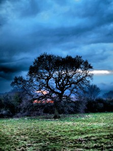 Tree and Clouds: Derby, UK