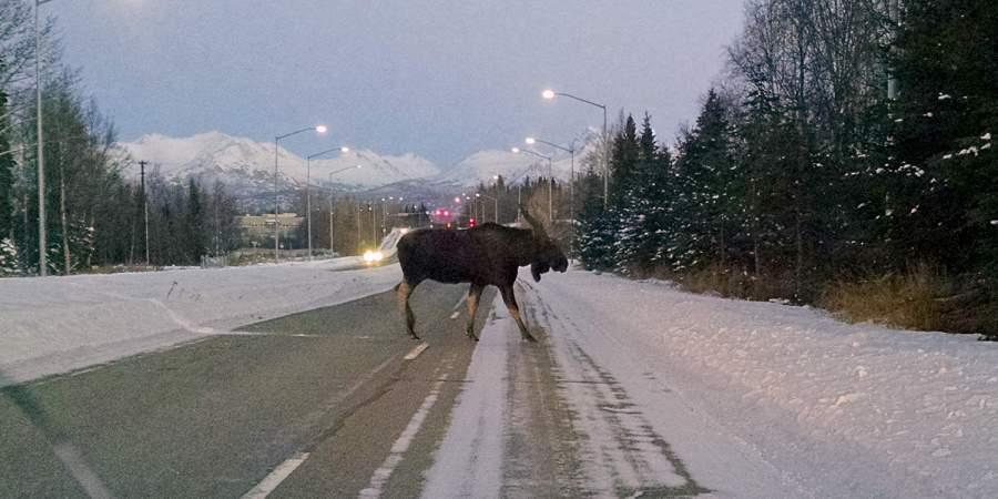 Alaska Day: Why Alaska is So Great!