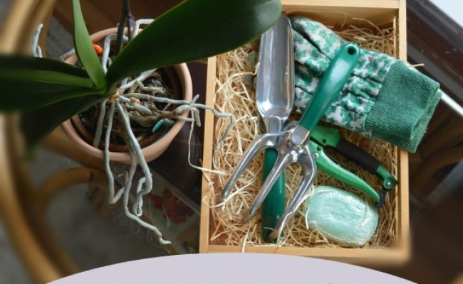 7 Gift Ideas For Gardening Moms Northern Homestead