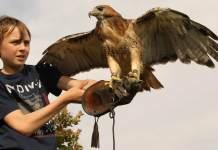 Fly a falcon