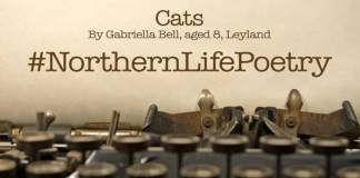 poetry cats