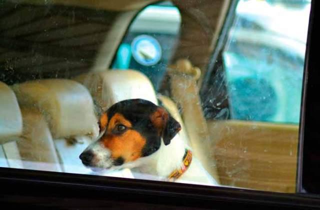 Dog Psychologist