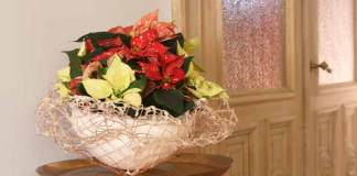 Poinsettia Copper Basket