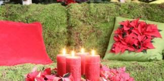 Poinsettia Star Wreath