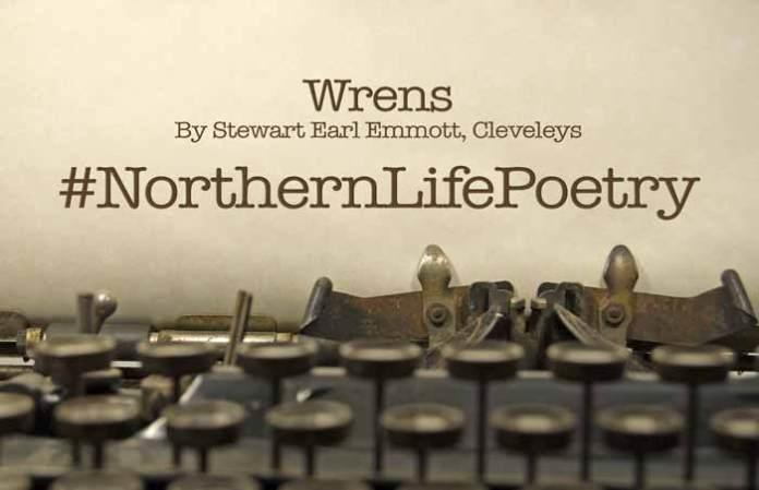 poetry Wrens