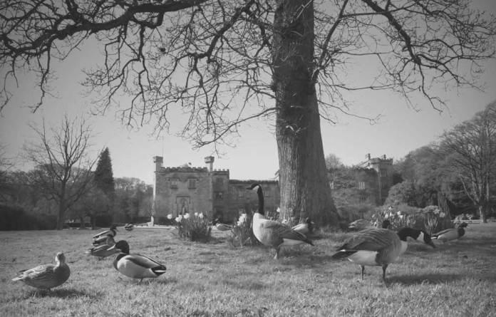 Eddy Rawlinson Towneley Park