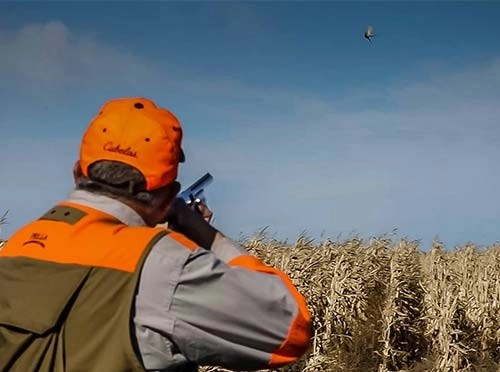 South Dakota Pheasant Hunt in Cornfield