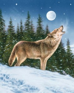 Majestic Outdoors - Wolf