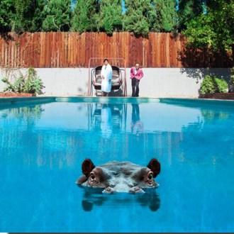 Our review of Sparks' 'Hippopotamus'