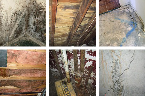 Mold and Mildew Smells  Northern Virginia Basements