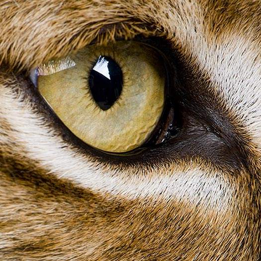 what cats eyes tell