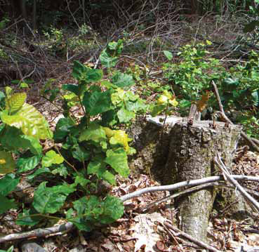 Image Result For How Much Is Ginseng Worth Per Pound