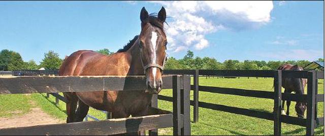 riverhead horse farm serendipity
