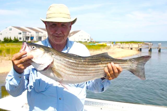 fishing report north fork long island