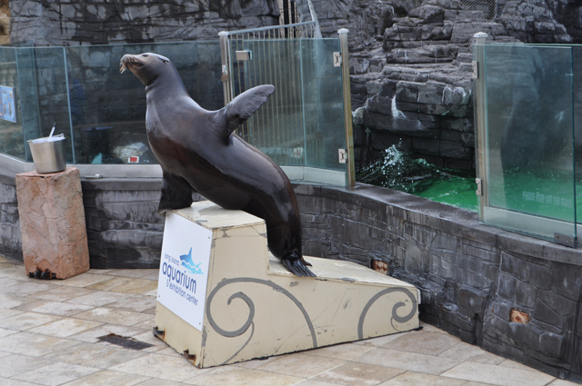 sea lion Long Island Aquarium