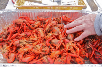 Boiled crawfish made an appearance on the pot luck table this year.